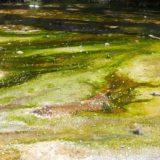 New Zealand【6日目】<北島6日目>ワイマング火山渓谷で自然の色の美しさを再確認!タウポ湖、フカフォール観光。